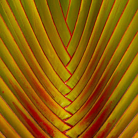 Palm leaf by Paul Drajem - Nature Up Close Leaves & Grasses ( plant, palm, palm tree, green, artistic, lines, leaf, leaves )