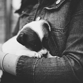 Cubby by Annamarie Dearr - Black & White Animals ( animals, puppies, black and white, emotional, candids, candid,  )