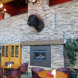 Hotel Lobby in Waterton by Linda Doerr - Buildings & Architecture Other Interior ( buffalo, walls, lobby, waterton, stone, hotel )