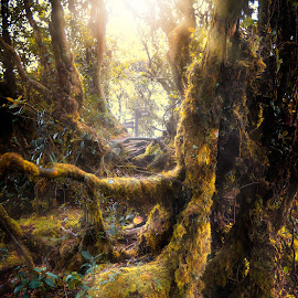 Mossy Forest by Stanley Loong - Nature Up Close Trees & Bushes ( bushes, ray of light, trees, forest, mossy, daylight )