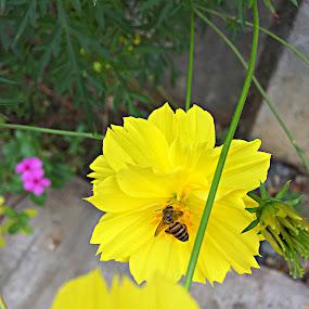 Morning Bee Flower by Reynaldo Ugalde - Flowers Single Flower