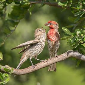 Feed Me!!! by Sandy Hurwitz - Animals Birds