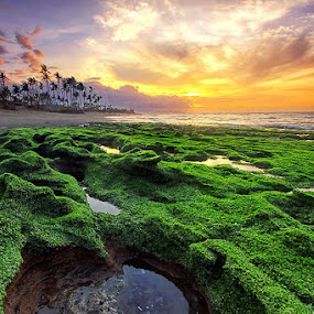 Green Coral by Agoes Antara - Landscapes Sunsets & Sunrises ( bali, agoes antara, sunrise, landscape )