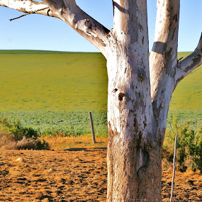 Barren by Adell du Plessis - Nature Up Close Trees & Bushes ( field, nature, tree, landscape, dead tree )