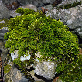 Looks like a hawk ... by Slavko Marcac - Nature Up Close Other plants ( moss, rock, hawk )