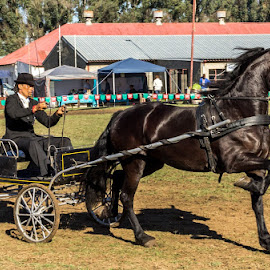 Horse and Cart by Thys Du Plessis - Animals Horses
