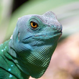by Lisa Martin - Animals Reptiles