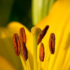 by Chetan Saini - Nature Up Close Flowers - 2011-2013