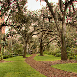 Bok Tower Gardens by Rob Whidden - City,  Street & Park  Historic Districts
