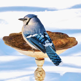 A warm drink to start the day. by Carolyn Kernan - Animals Birds (  )