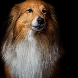 by Niclas Ådemark - Animals - Dogs Portraits