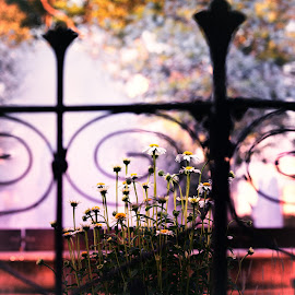 Walk in a Park by Michael Duncan - City,  Street & Park  City Parks ( water, fence, park, fountain, flowers )