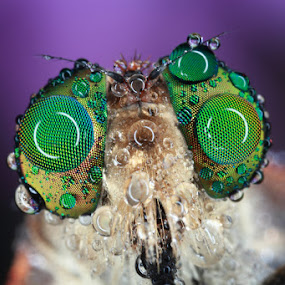 UNTITLED 09 by Satriyo Andoyo - Animals Insects & Spiders ( macro )