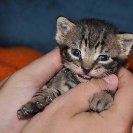 Little cat by Alek Sandra - Animals - Cats Kittens
