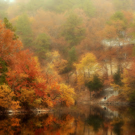 SOFT FALL by Dana Johnson - Landscapes Forests ( autumn, fall, morning fog, lake, forest, landscape )