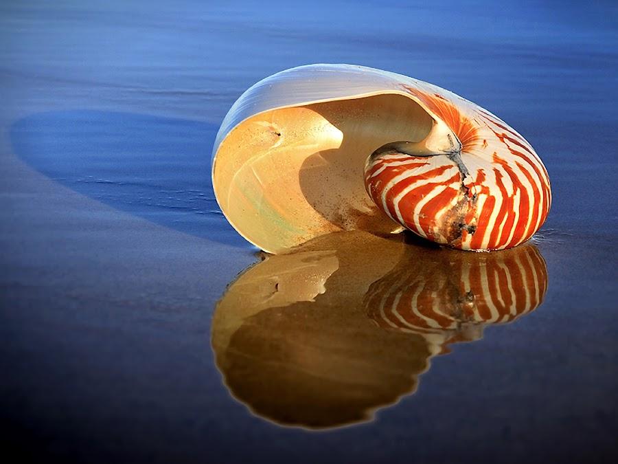 Beached by Ann Van Breemen - Artistic Objects Still Life ( water, pwcstilllife-dq, sand, shell, queensland, reflection, surfers paradise, australia, beach )