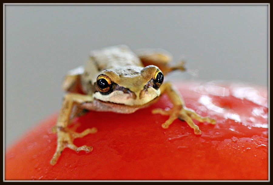 Frog by Deb Sulzberger - Novices Only Wildlife
