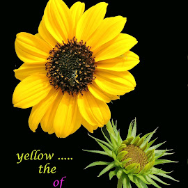 yellow delight by SANGEETA MENA  - Typography Quotes & Sentences