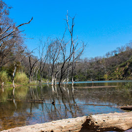 Lake in Forest by Rana Singh - Landscapes Forests ( sky, tree, forest, lake, landscape )