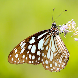 by Ankit Kerkal - Novices Only Macro (  )