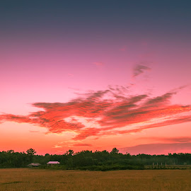 Paddy Fields by Abhishek Nag - Landscapes Prairies, Meadows & Fields ( clouds, sky, wide angle, sunset, rice fields )