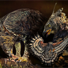 The Crown Eagle by Dries Fourie - Digital Art Animals