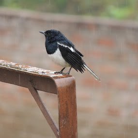 Rain by Priyam Ash - Novices Only Wildlife