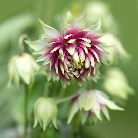 Wee beastie tries to hide by Stephen Crawford - Flowers Flower Gardens ( colour, contrast, purple, green, insect, beastie, garden, flower,  )