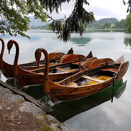 Swan boat, Bled Lake, Slovenia by Dražen Komadina - City,  Street & Park  Street Scenes ( swan boat, bled lake, slovenia )