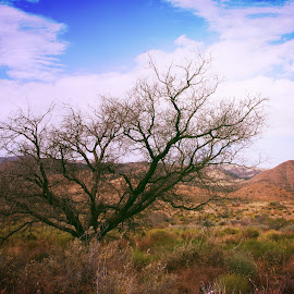 Arezona by Kaushik Bera - Nature Up Close Trees & Bushes