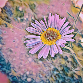 Single Flower by Johnny Knight - Novices Only Flowers & Plants ( creative, nature, flora, colors, wildflower, outdoor, artistic, close up, rural, flower, floral )