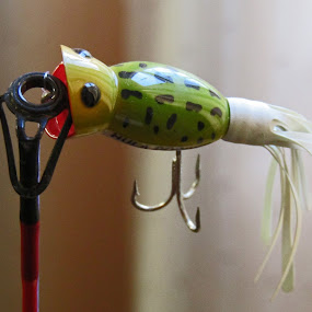 Fishing Lure by Daryl Peck - Novices Only Objects & Still Life ( novice, still life, object, lure, fishing )
