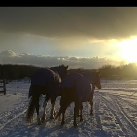 Cold night at the barn by Tammy Stahlbush - Animals Horses