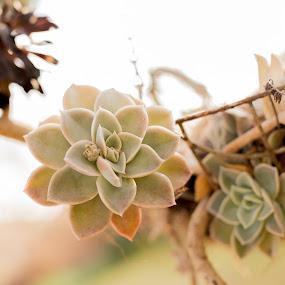 by Christopher van Heerden - Nature Up Close Other plants