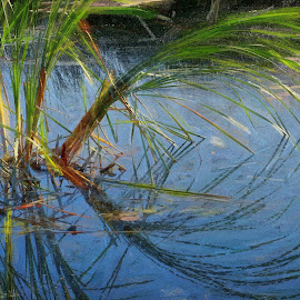Cattails in sun by Gaylord Mink - Digital Art Things ( pond, sunlight, cattails, digital art )