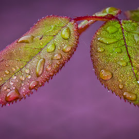 by Eduard Andrica - Nature Up Close Natural Waterdrops