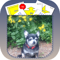 Rally Obedience Dog Training For PC (Windows And Mac)