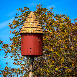 Bird Condo by James Kirk - City,  Street & Park  Street Scenes ( fall, house, garden, birds )