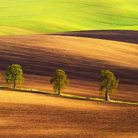 by Roman Bjuty - Landscapes Prairies, Meadows & Fields