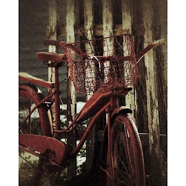 by Natasha Jensen - Transportation Bicycles ( bicycle, art, yard, photography, photo, beloitwi )