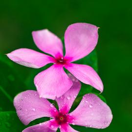 201711050858 Couple In Love by Steven De Siow - Flowers Flower Gardens ( pink flower, flower garden, nature, couple, flower,  )