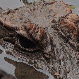 Eye Spy by Shane Schadie - Animals Reptiles