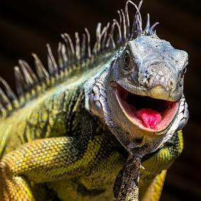 by Renos Hadjikyriacou - Animals Reptiles (  )