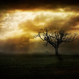 One Tree by Dave Godden - Landscapes Weather ( countryside, farm, field, trees, rural, country )
