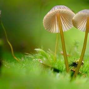 Mushrooms by Cvetka Zavernik - Nature Up Close Mushrooms & Fungi ( macro, green, forest floor, mushroom )