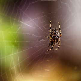 creepy crawler by Debbie Slocum Lockwood - Animals Insects & Spiders