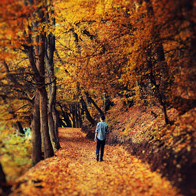 autumn dream by Adrian  Limani - Landscapes Forests ( walking, dream, autumn, beautiful, boy )