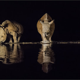 Rhinos drinking by Efraim van der Walt - Animals Other Mammals ( night photography, drinking, reflections, rhino )