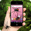 Spider On Screen Plus Funny Joke 2017 APK for Bluestacks