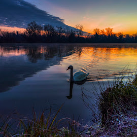 Swan by Miro Cindrić - Landscapes Waterscapes